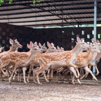 出售各种鹿产品