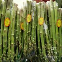 綠之緣無公害種植  蘆筍