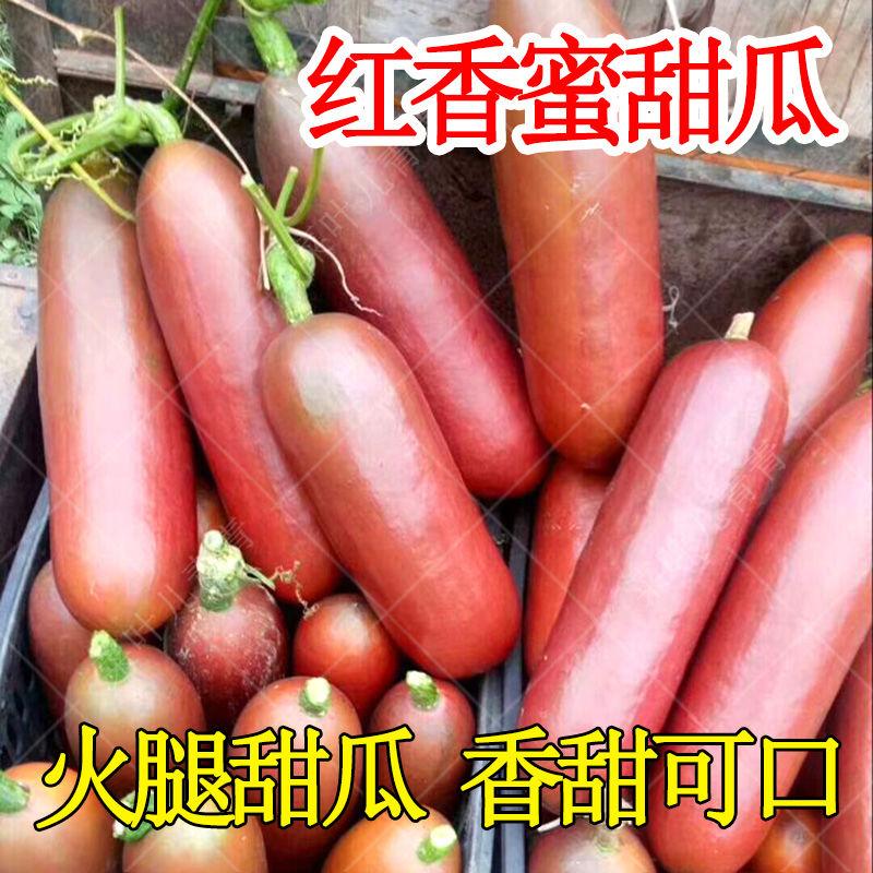 香甜红香蜜甜瓜种子香如蜜火腿香瓜 香味扑鼻汁甜蜜四季播甜瓜苗