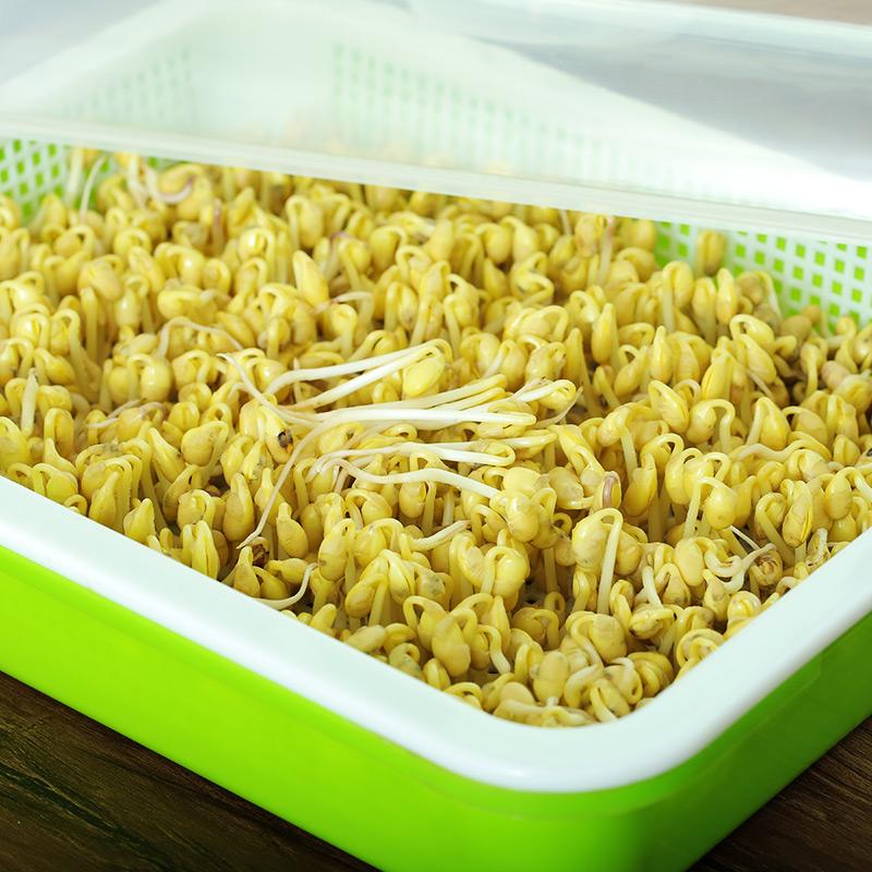 黄豆种籽3斤